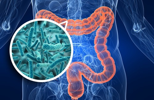 Microbiota-squilibrato-prima-causa-del-colon-irritabile